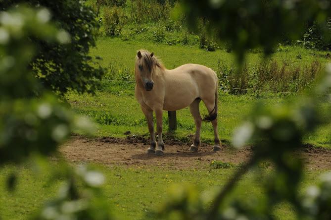 Pferd bei Ferienhaus