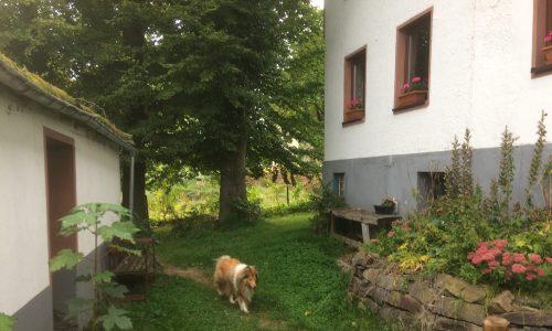 Hunden können sich frei bewegen im umzäunten Garten
